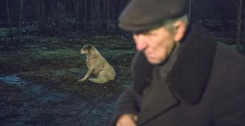Зимой на улице неуютно и человеку и животным.